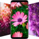 🌺 Flower Wallpapers – Colorful Flowers in HD & 4K Apk Download For Android