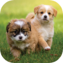Puppy Wallpapers HD App Download For Android and iPhone