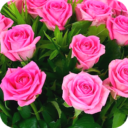 Rose Wallpapers App Latest Version  Download For Android
