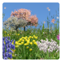 Spring Flowers Free Wallpaper App Latest Version  Download For Android