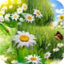 Spring Wallpaper HD App Latest Version  Download For Android