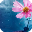 AppLock Theme Flower App Download For Android