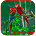 Parrots HD Live Wallpaper App Latest Version  Download For Android