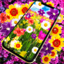 Flowers live wallpaper Apk Download For Android